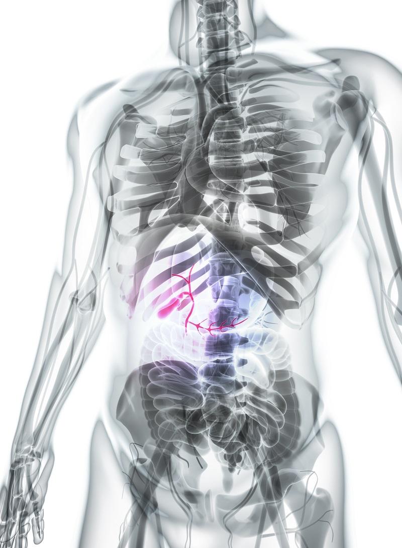 Downriver Gastroenterology Gallbladder